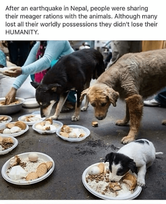 Canidae - After an earthquake in Nepal, people were sharing their meager rations with the animals. Although many lost all their worldly possessions they didn't lose their HUMANITY