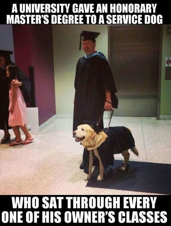 Dog - A UNIVERSITY GAVE AN HONORARY MASTER'S DEGREE TO A SERVICE DOG WHO SAT THROUGH EVERY ONE OF HIS OWNER'S CLASSES