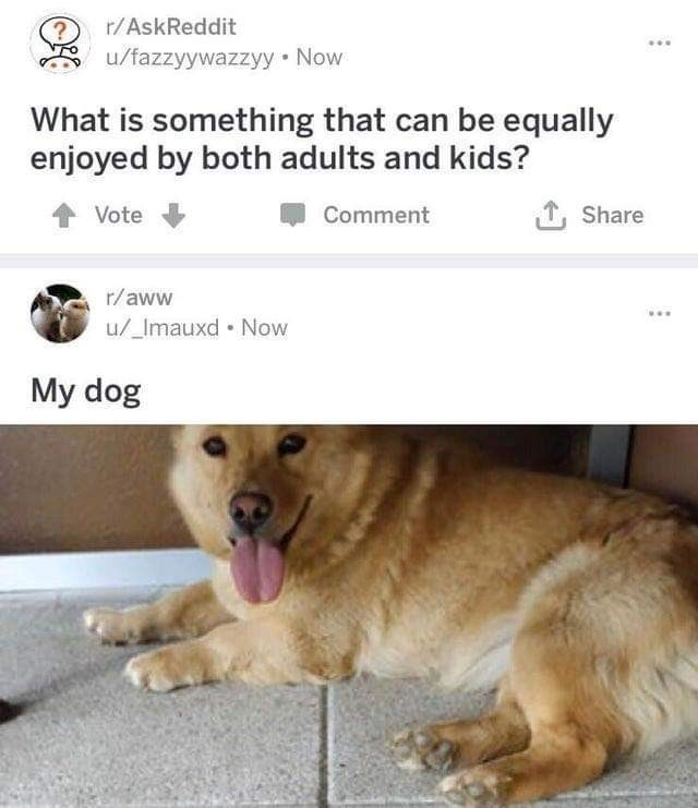 Dog - r/AskReddit /fazzyywazzyy Now What is something that can be equally enjoyed by both adults and kids? Vote Share Comment r/aww u/_Imauxd Now My dog