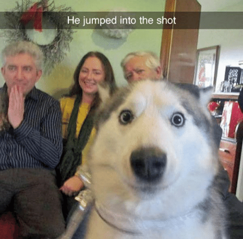 Dog - He jumped into the shot
