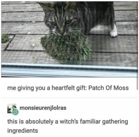 Cat - me giving you a heartfelt gift: Patch Of Moss monsieurenjlolras this is absolutely a witch's familiar gathering ingredients
