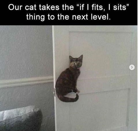 """Cat - Our cat takes the """"if I fits, I sits"""" thing to the next level."""