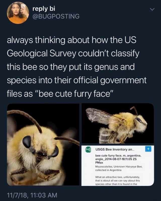 """Tweet that reads, """"always thinking about how the US Geological Survey couldn't classify this bee so they put its genus and species into their official government files as 'bee cute furry face'"""""""