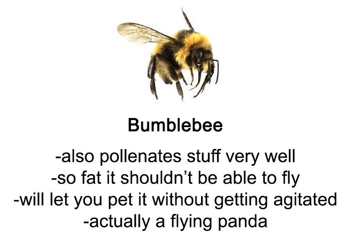 Bee - Bumblebee -also pollenates stuff very well fat it shouldn't be able to fly -will let you pet it without getting agitated -actually a flying panda