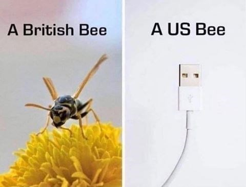 Insect - A US Bee A British Bee