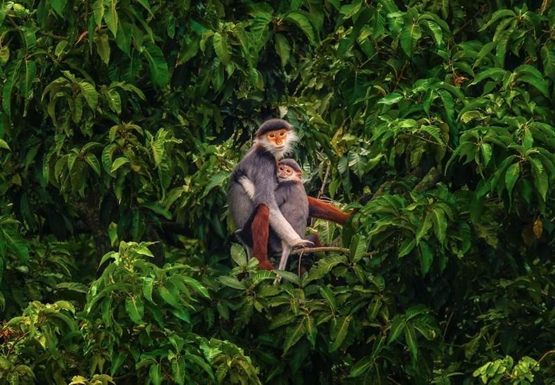 animal photo - Vegetation