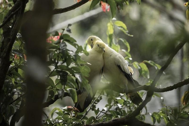 animal photo - Bird