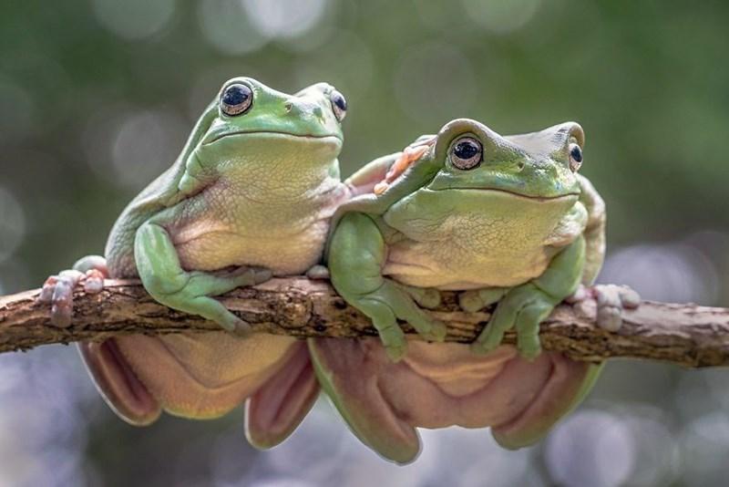 animal photo - Frog