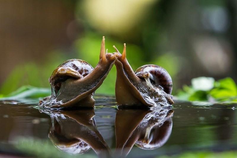 animal photo - Nature