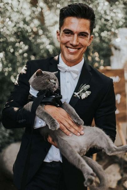 cat groomsman - Formal wear