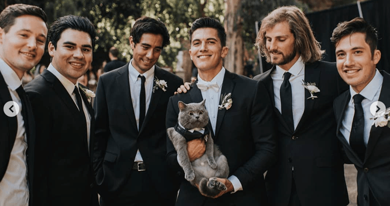 cat groomsman - Suit