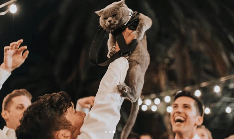 cat groomsman - Photograph
