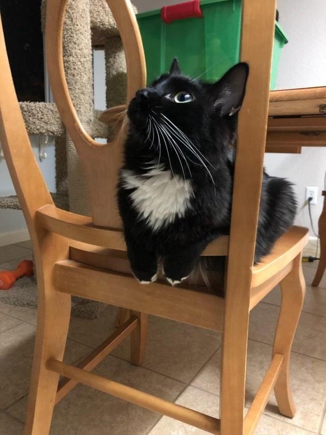 cat loaf - Cat