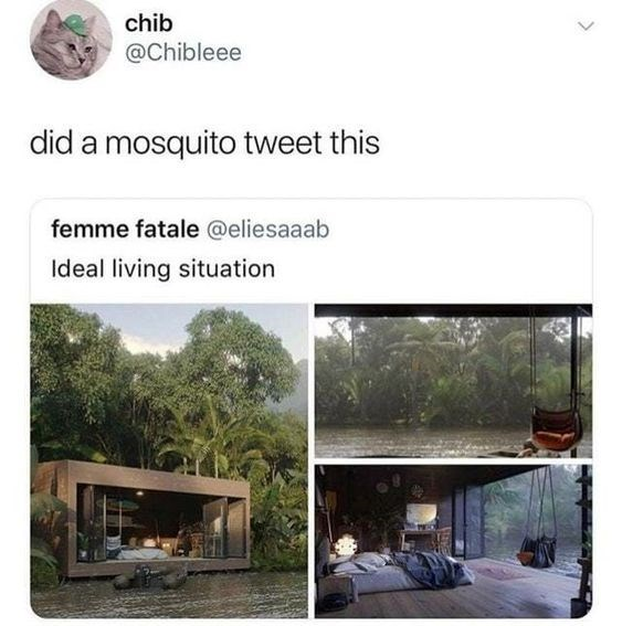 Architecture - chib @Chibleee did a mosquito tweet this femme fatale @eliesaaab Ideal living situation