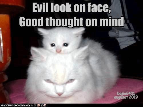 cat memes - 9347660032