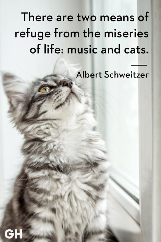 cat meme with quote about getting away from the miseries of life using cats and music by Albert Schweitzer