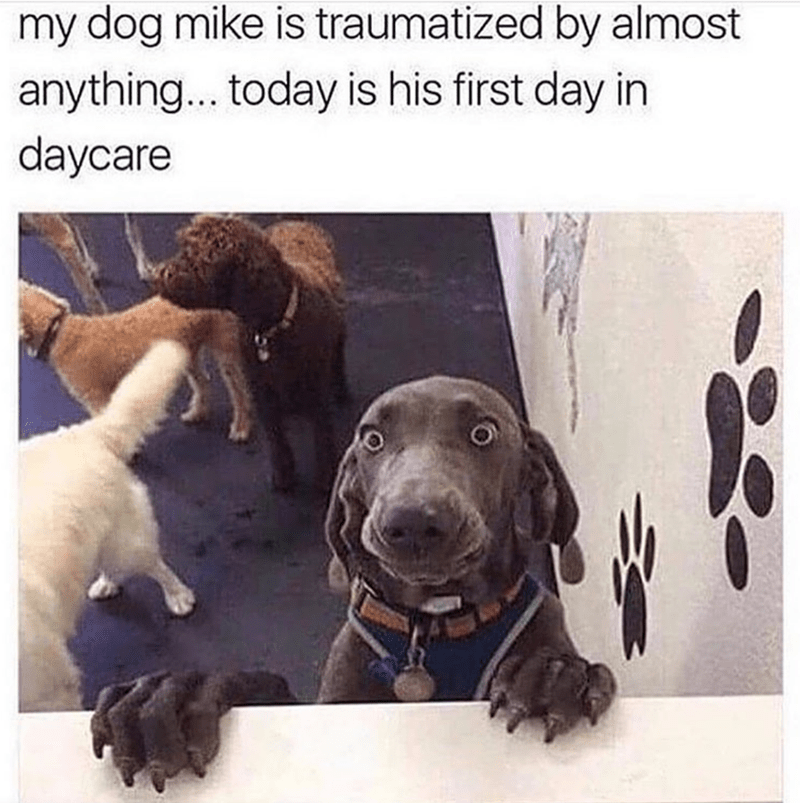 Dog - my dog mike is traumatized by almost anything... today is his first day in daycare