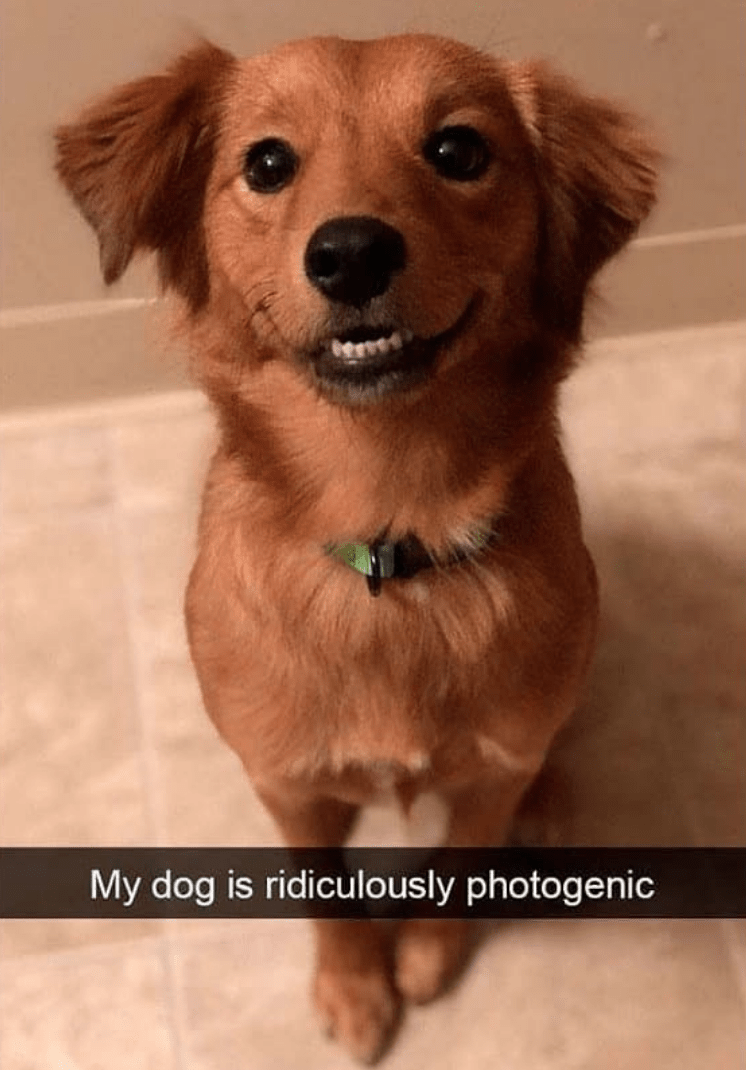 Dog - My dog is ridiculously photogenic