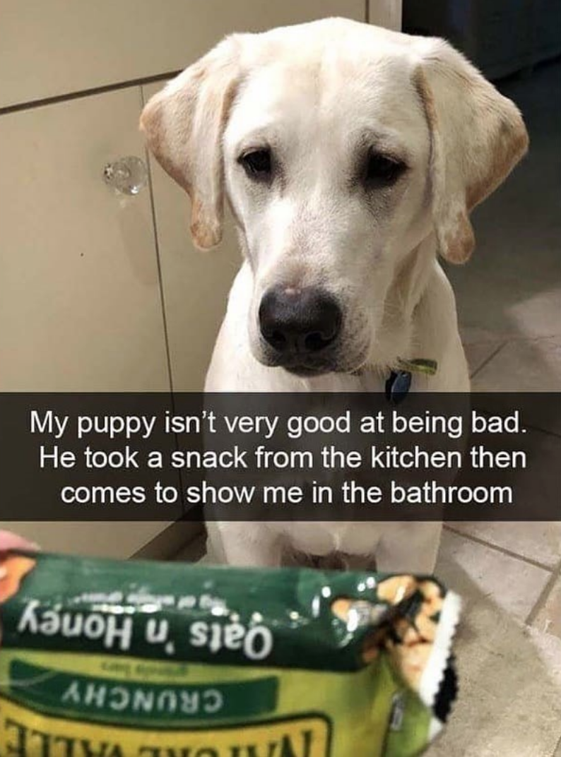 Dog - My puppy isn't very good at being bad. He took a snack from the kitchen then comes to show me in the bathroom Oats 'n Honey CRUNCHY