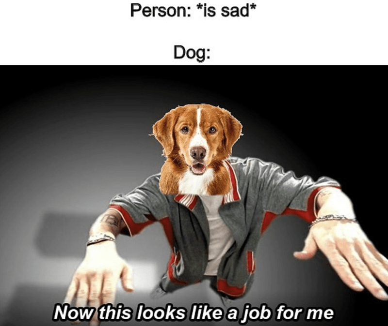 Dog - Person: *is sad* Dog Now this looks like a job for me
