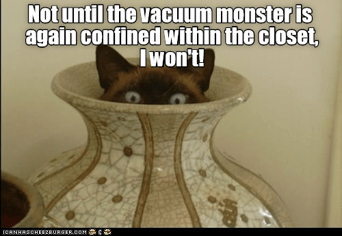 Cat - Not until the vacuum monster is again confined within the closet, Iwon't! CANHASCHEE2EURGER cOM