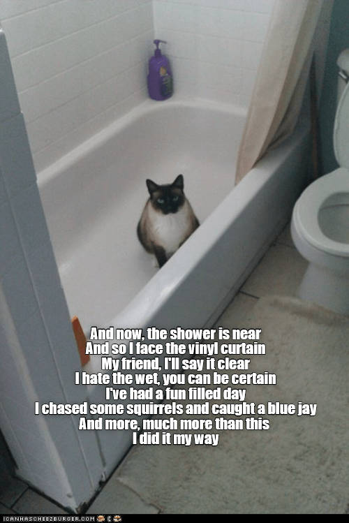 Cat - And now, the shower is near And so I face the vinyl curtain My friend, I'll say it clear Ihate the wet, you can be certain I've had a fun filled day Ichased some squirrels and caught a blue jay And more, much more than this Idid it my way ICANHASOHEEZBURGER.00M