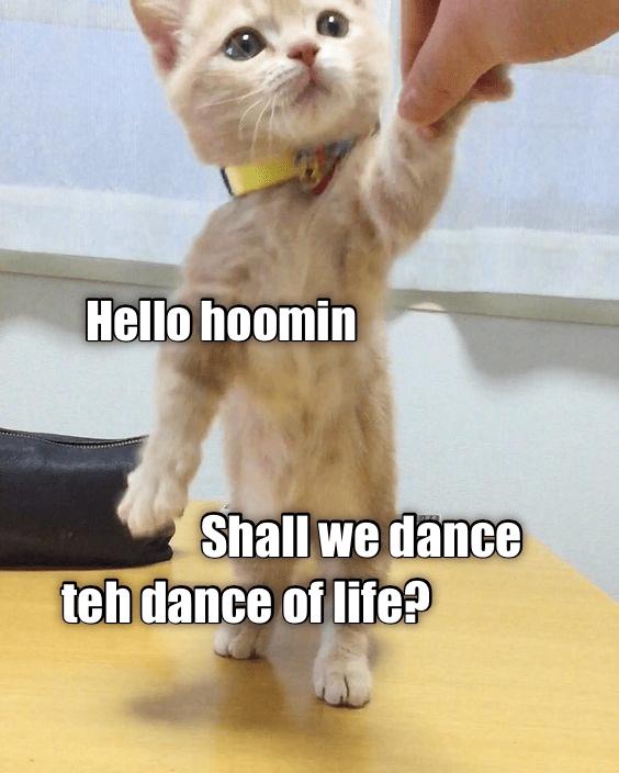 Cat - Hello hoomin Shall we dance teh dance of life?