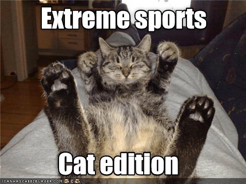 Photo caption - Extreme sports Cat edition ICANHASCHEE2BURGER cOM