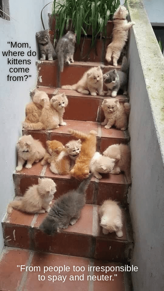 """Rock - """"Mom, where do kittens come from?"""" """"From people too irresponsible to spay and neuter."""""""