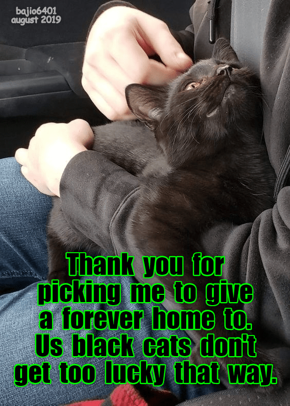 Photo caption - bajio6401 august 2019 Thank you for picking me to give a forever home to. Us black cats dont get too lucky that way.