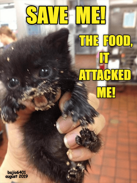 Photo caption - SAVE ME! THE FOOD, IT ΤΤACKED ME! bajio6401 august 2019