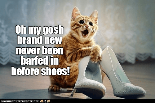 Cat - Oh my gosh brand new never been barfed in before shoes! CANHASCHEE2EURGER COM