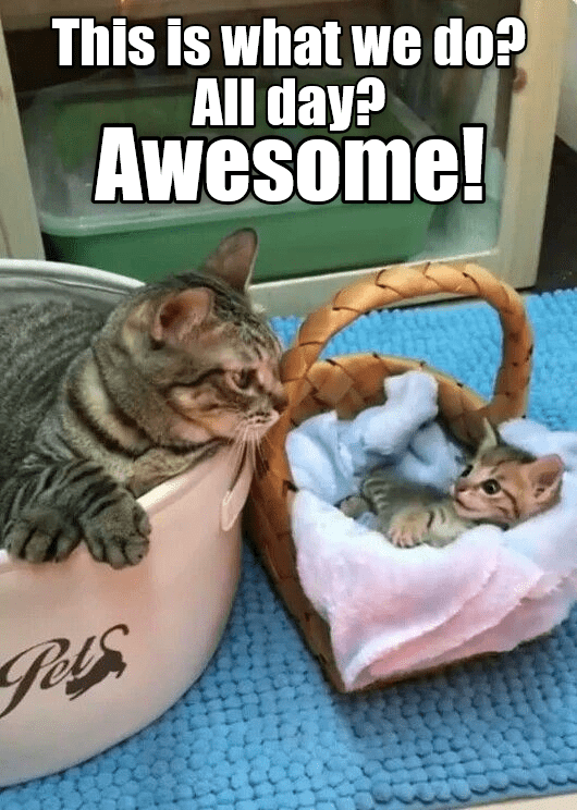 Cat - This is what we do? All day? Awesome!
