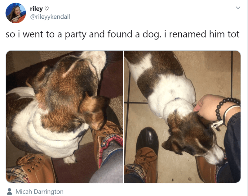 dog at a party - Canidae - riley @rileyykendall so i went to a party and found a dog. i renamed him tot Micah Darrington
