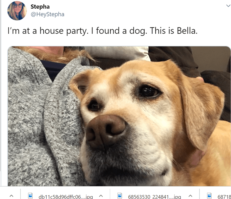 dog at a party - Dog - Stepha @HeyStepha I'm at a house party. I found a dog. This is Bella. db11c58d96dffc06....jpg 68563530 224841....jpg 68718