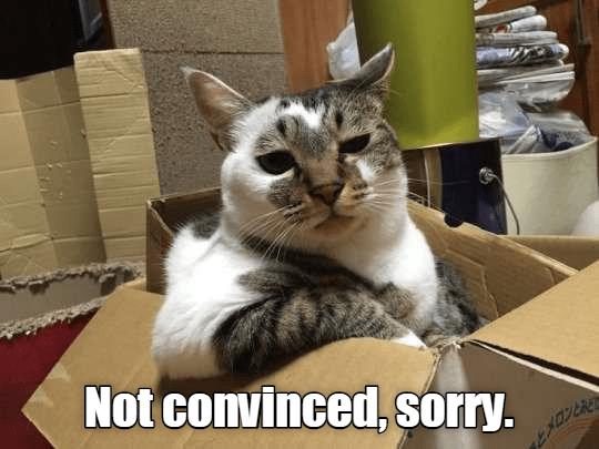 cat meme cat box sorry - 9347829760