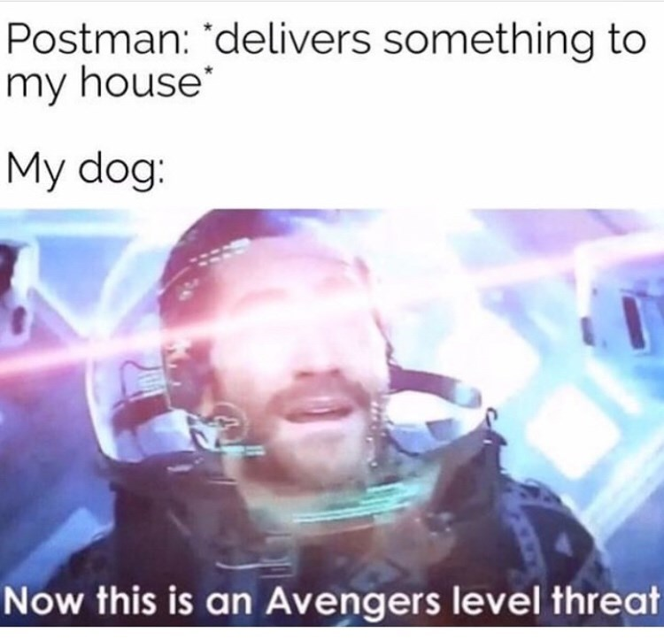 Text - Postman: 'delivers something to my house My dog: Now this is an Avengers level threat