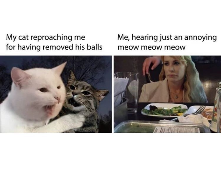 Cat - My cat reproaching me for having removed his balls Me, hearing just an annoying meow meow meow