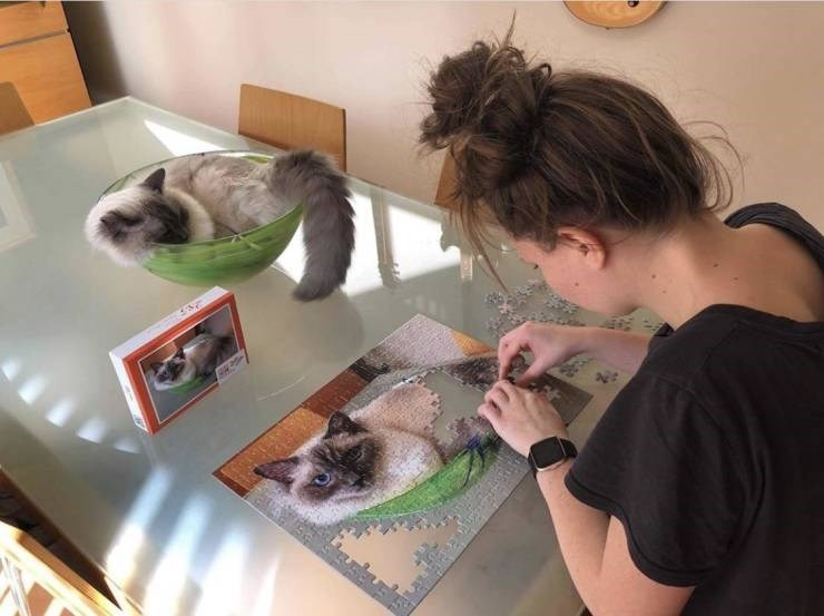 Funny image of a woman putting together a puzzle of an image of her cat, while her cat sits in front of it