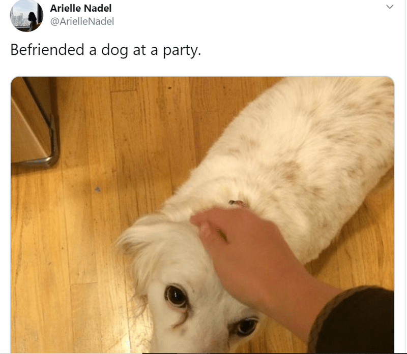 dog at a party - Canidae - Arielle Nadel @ArielleNadel Befriended a dog at a party.