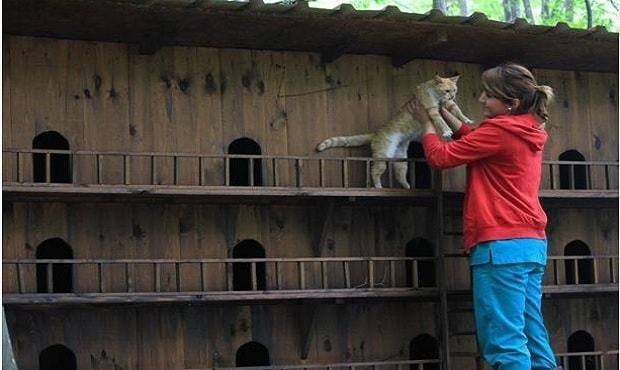 turkey cat sanctuary - House