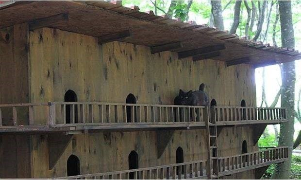 turkey cat sanctuary - Architecture