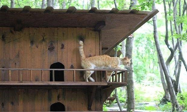 turkey cat sanctuary - Wildlife