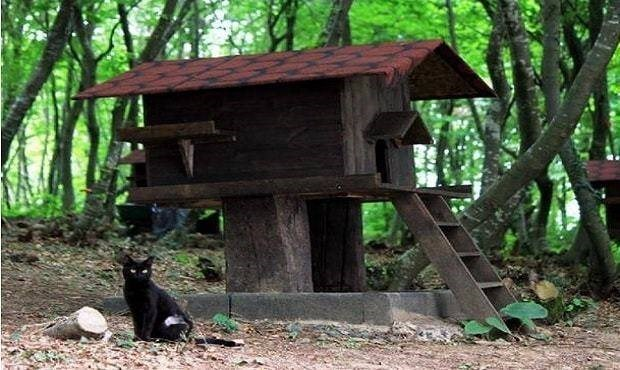 turkey cat sanctuary - Tree