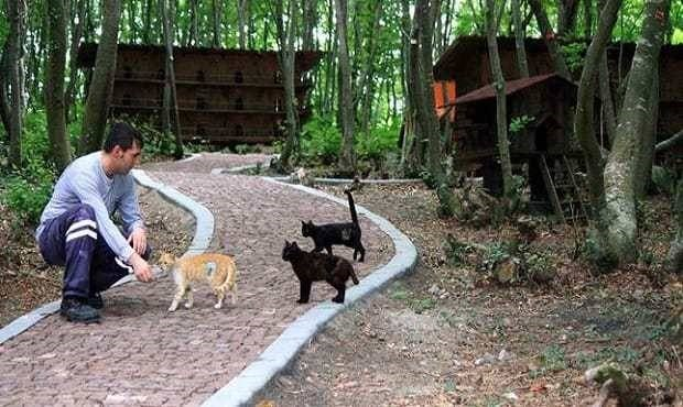 turkey cat sanctuary - Canidae