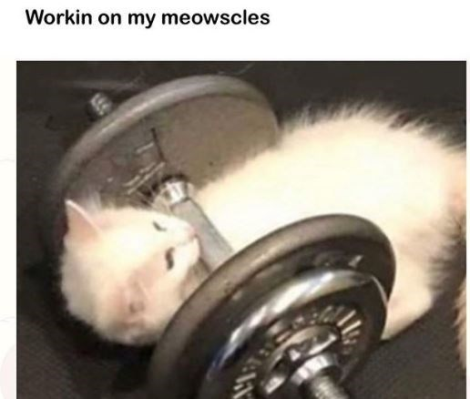 Cat - Workin on my meowscles