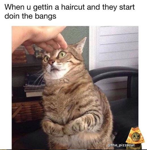 Cat - When u gettin a haircut and they start doin the bangs @the_pizzacat