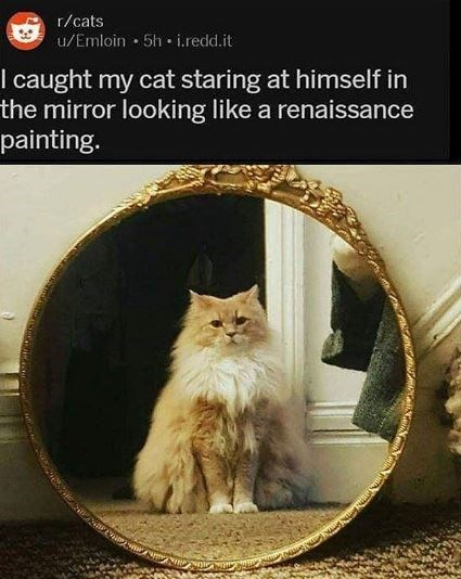 Cat - r/cats u/Emloin 5h i.redd.it I caught my cat staring at himself in the mirror looking like a renaissance painting.