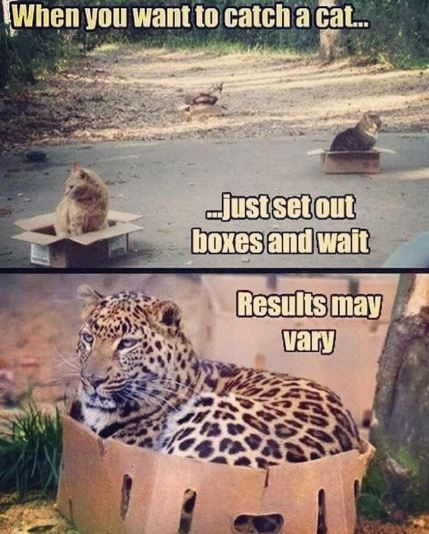 Terrestrial animal - When you want to catch a ca.. Just set out boxes and wait Results may vary
