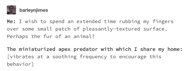 cats tumblr - Text - barleynjimes Me I wish to spend an extended time rubbing my fingers over some small patch of pleasantly-textured surface. Perhaps the fur of an animal? The miniaturized apex predator with which I share my home: [vibrates at a soothing frequency to encourage this behavior]